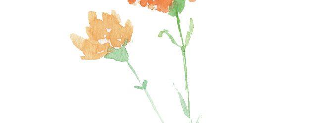 水彩オレンジカーネーション